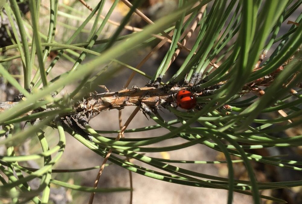 Autumnal Equinox, Labyrinths, and Ladybugs – the Call of your Soul